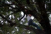 treesurf